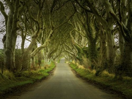 Path through old trees