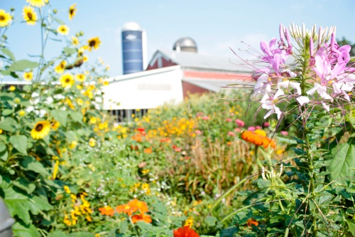 Farm garden image