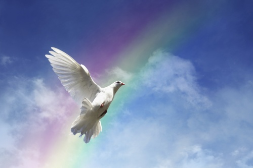White Dove and Rainbow