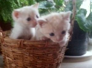 Bday kittens1