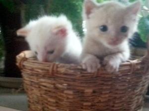 Birthday Kittens next best