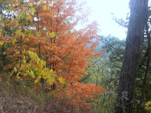 fall color 20141