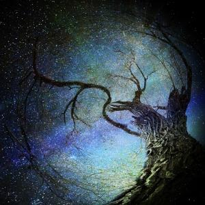 magical night tree