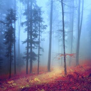 misty autumn mountain road