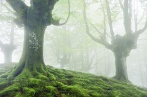 misty trees (2)