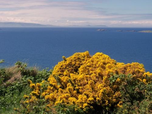 Glens of Antrim, Gorse1