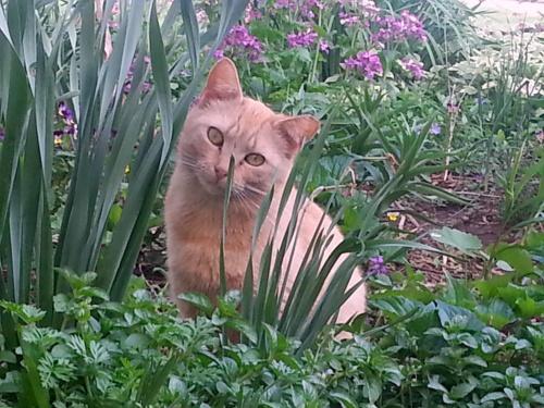 Owl Cat in the garden