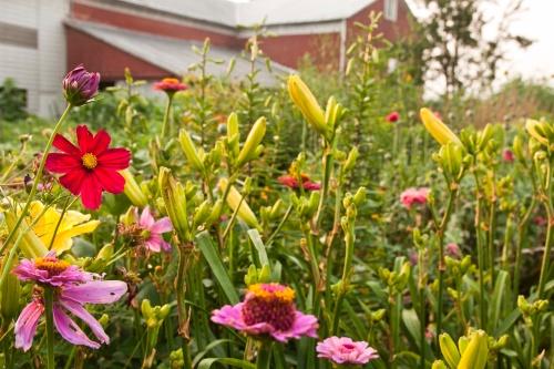 flowers near garden