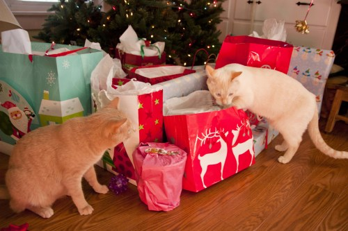 Peaches and Cream opening gifts.JPG1