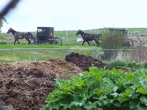 Farm garden with horse and buggy going by1