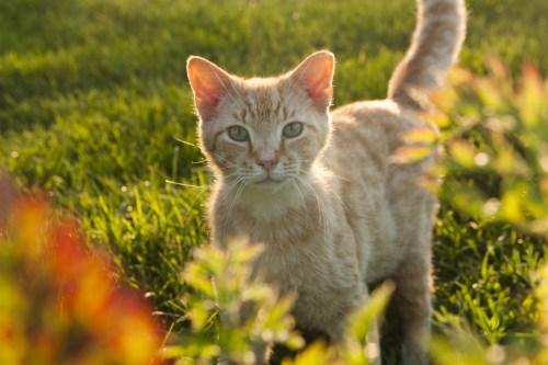 Apothecarist Cat