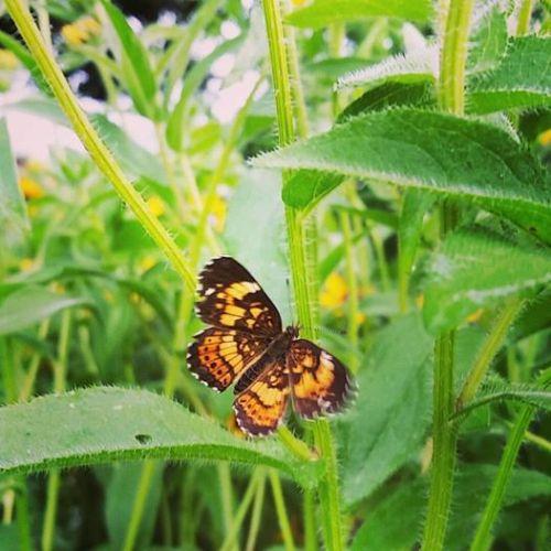butterfly in evening garden by Elise