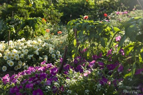 Garden shot by Elise in July