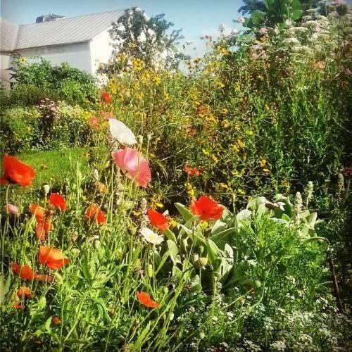 garden, yard, and old barn.jpg1