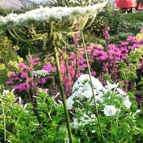 morning garden along the road