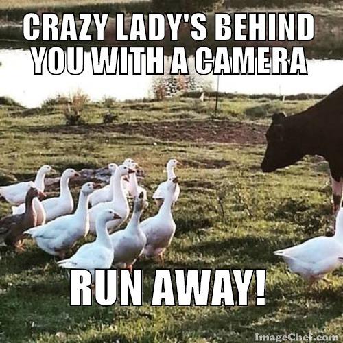 crazy-lady
