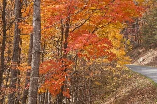 autumn-trees-in-mountain-drive