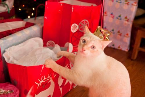 cream-into-the-presents